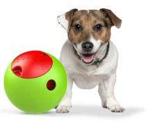 The Foobler Timed, Self Reloading Puzzle Feeder for Dogs Toy Ball