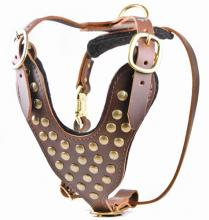 Dean and Tyler Stud Brother leather Dog Harness